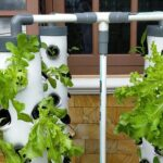 Vertical Hydroponic System || Hydroponic Lettuce