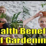 Unbelievable Health Benefits of Gardening