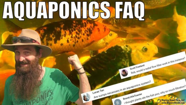 Aquaponics Q&A | Bell Siphons – Breeding Fish – Are Sumps Necessary + MORE