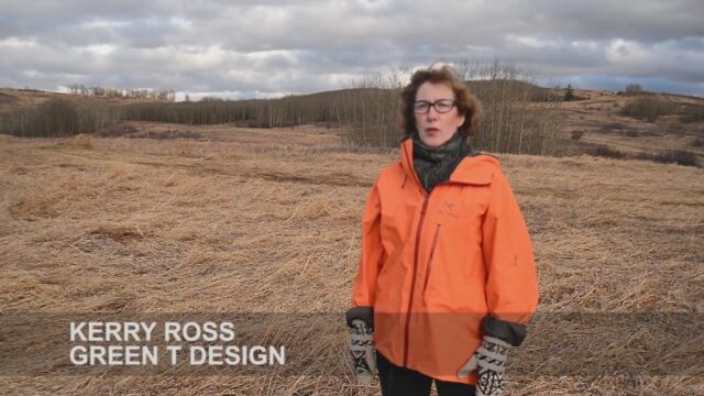"""""""Greening Rooftops in Alberta: People, Place + Projects"""" by Kerry Ross"""