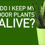 How Do I Keep My Indoor Plants Alive? | Gardening Basics w/ William Moss