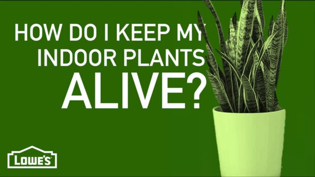 How Do I Keep My Indoor Plants Alive? | Gardening Basics w/ William Moss