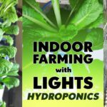 INDOOR FARMING/LIGHTS WITH HYDROPONICS