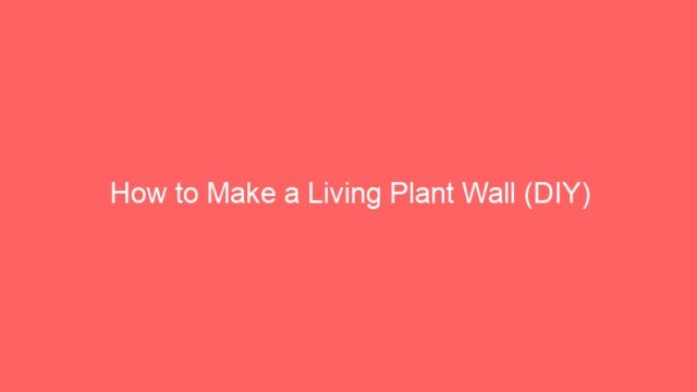 How to Make a Living Plant Wall (DIY)