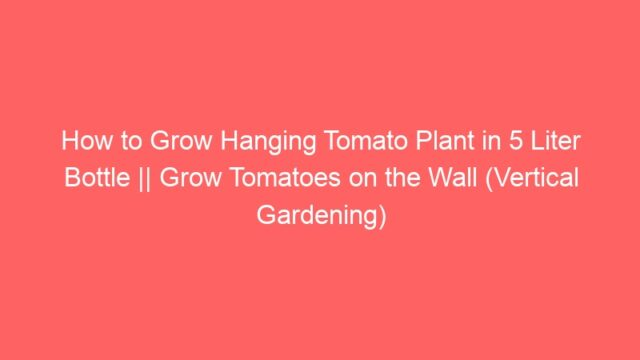 How to Grow Hanging Tomato Plant in 5 Liter Bottle || Grow Tomatoes on the Wall (Vertical Gardening)