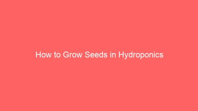 How to Grow Seeds in Hydroponics