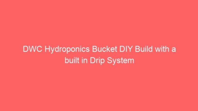 DWC Hydroponics Bucket DIY Build with a built in Drip System