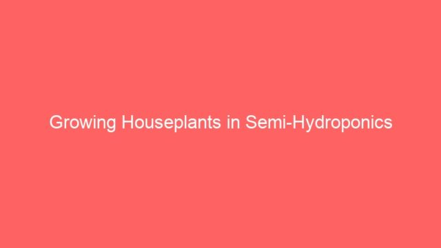 Growing Houseplants in Semi-Hydroponics