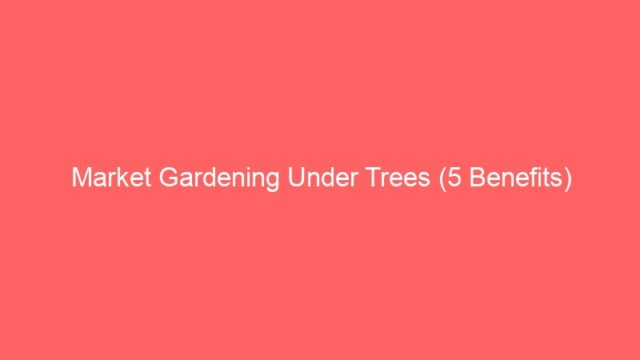 Market Gardening Under Trees (5 Benefits)