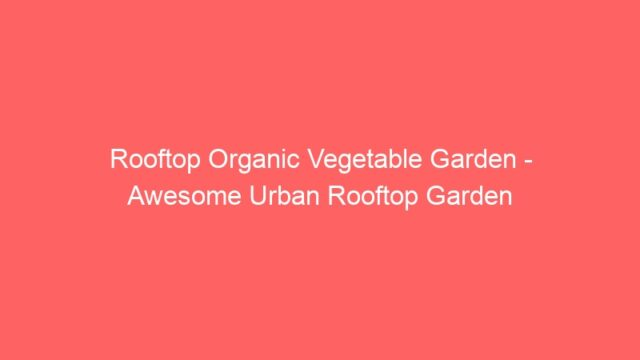 Rooftop Organic Vegetable Garden – Awesome Urban Rooftop Garden