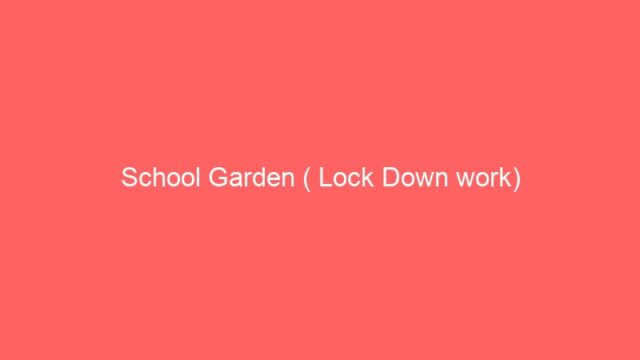 School Garden ( Lock Down work)