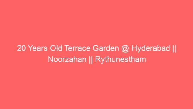 20 Years Old Terrace Garden @ Hyderabad || Noorzahan || Rythunestham