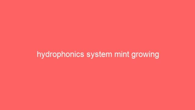 hydrophonics system mint growing