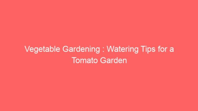 Vegetable Gardening : Watering Tips for a Tomato Garden