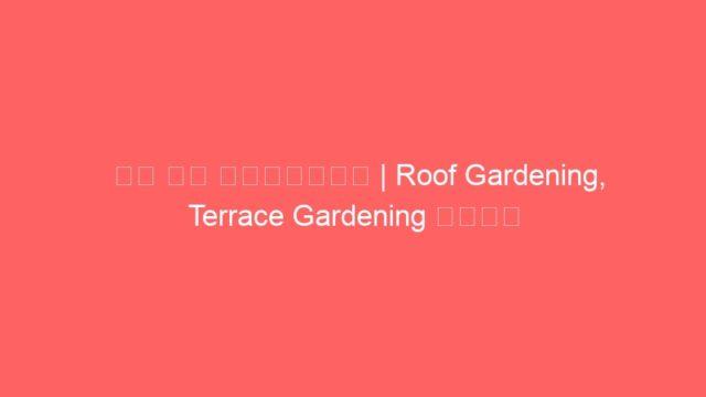 छत पर बागवानी | Roof Gardening, Terrace Gardening करना चाहते है तो पूरा Video जरूर देखें