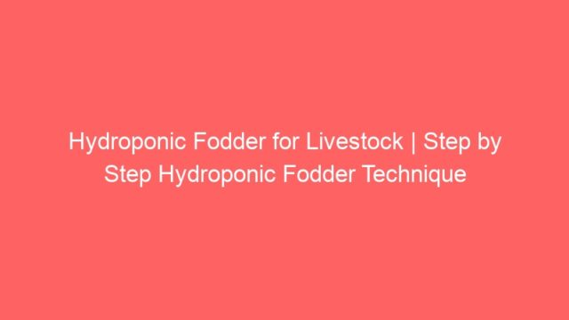 Hydroponic Fodder for Livestock | Step by Step Hydroponic Fodder Technique