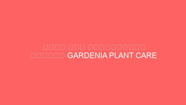 मेरा नया गार्डिनिया प्लांट GARDENIA PLANT CARE