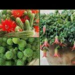 Amazing Hanging Succulents and  Hanging Cactus | Wonderful Ideas