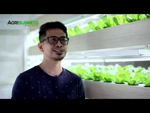 Farm in your Garage through Hydroponics Vertical Farming