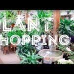 Plant Shopping At Rick's Garden Center