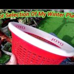 Pot Selection Of My Winter Plants(Hindi)