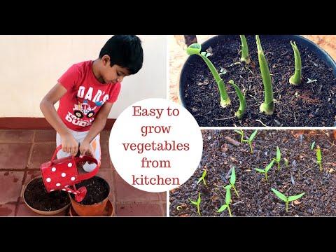 बिना बीज ख़रीदे मुफ़्त में उगायें ये सब्ज़ियाँ  Vegetables you can grow from kitchen without seeds