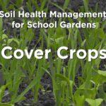 School Gardens: Cover Crops
