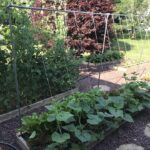 Set up a Leaning Trellis for Cucumbers & Squash