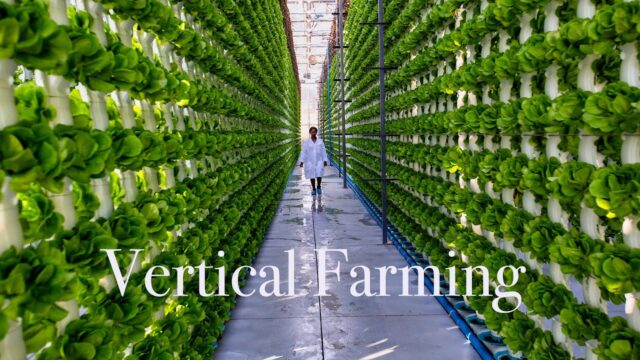 CAN-Agri – Vertical Farming. Amazing Modern Farming Technology