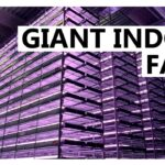 Giant Vertical Indoor Hydroponic Farm to Start Production