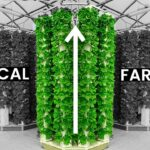 Vertical Farms: Hype or The Future?
