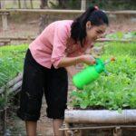 Today i prepare garden vegetable in my house