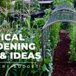 VERTICAL GARDENING TIPS & IDEAS: Why and how to add VERTICAL SPACE to your garden for EVERY BUDGET