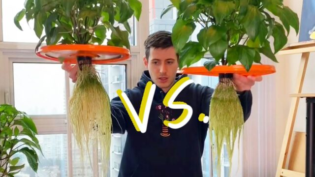 Hydroponic Peppers Race – Kratky vs DWC – Do Air Pumps Help Hydroponic Plants Grow Faster?