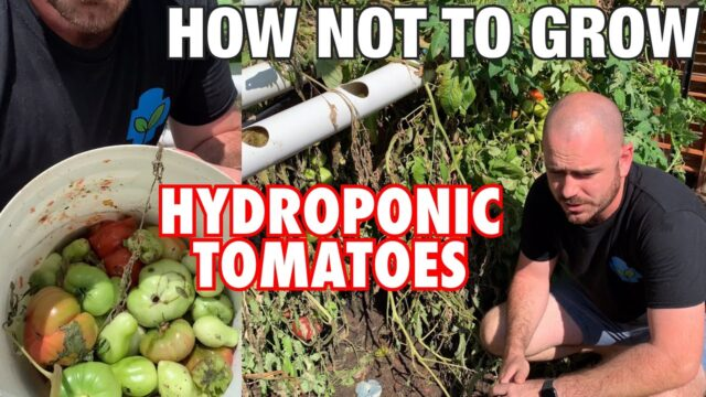 How (Not) to Grow Hydroponic Tomatoes…