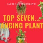 Top 7 Hanging Plants: Trailing Cacti & Succulent String Of Pearls, Orchid Cactus, Monkey Tail Cactus