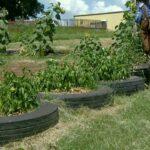 Murray County Jr. Master Gardeners