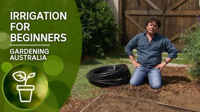 Irrigation Made Easy: Here's how you install irrigation
