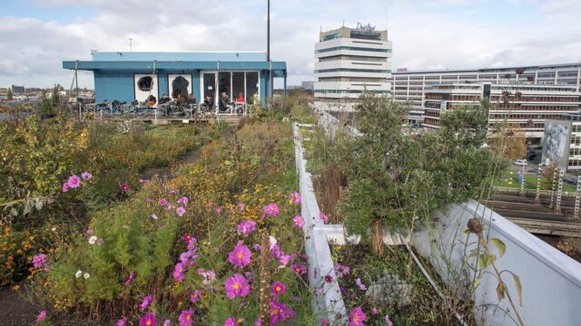 Green roofs and public water plazas help the Dutch manage