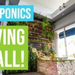 BUILDING AQUAPONICS LIVING WALL