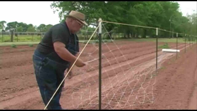 Crop Netting and Pole Beans – April 2010 – Growing a Vegetable Garden