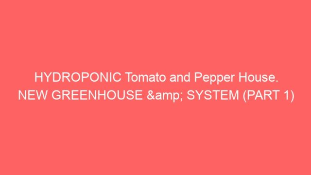 HYDROPONIC Tomato and Pepper House. NEW GREENHOUSE & SYSTEM (PART 1)