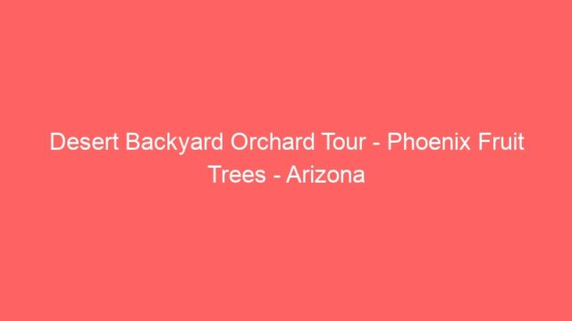 Desert Backyard Orchard Tour – Phoenix Fruit Trees – Arizona