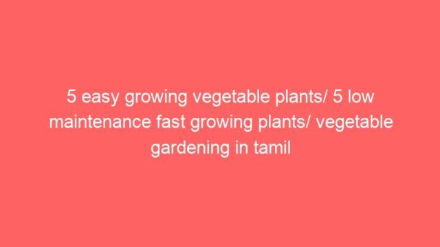 5 easy growing vegetable plants/ 5 low maintenance fast growing plants/ vegetable gardening in tamil