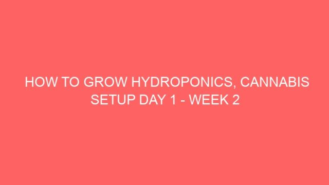 HOW TO GROW HYDROPONICS, CANNABIS SETUP DAY 1 – WEEK 2