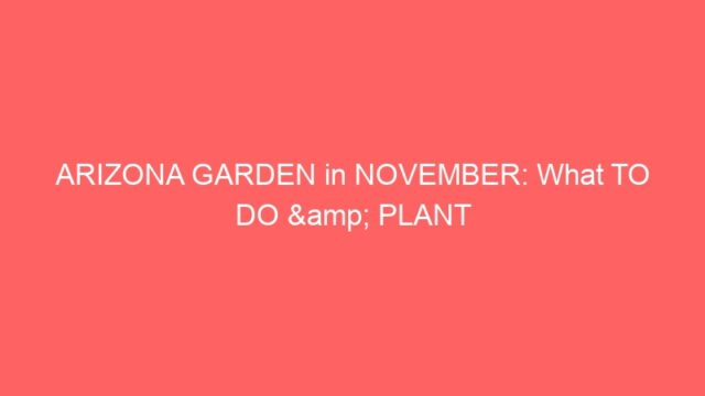 ARIZONA GARDEN in NOVEMBER: What TO DO & PLANT