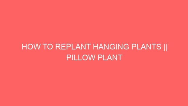 HOW TO REPLANT HANGING PLANTS || PILLOW PLANT