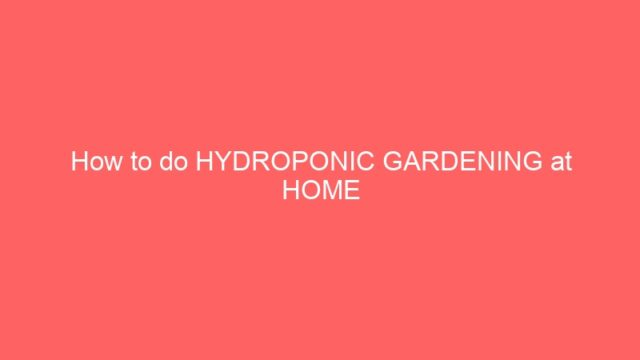 How to do HYDROPONIC GARDENING at HOME