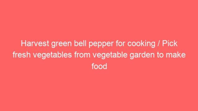 Harvest green bell pepper for cooking / Pick fresh vegetables from vegetable garden to make food