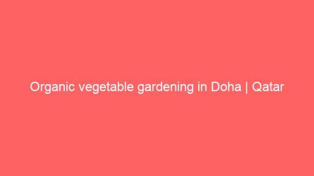 Organic vegetable gardening in Doha   Qatar